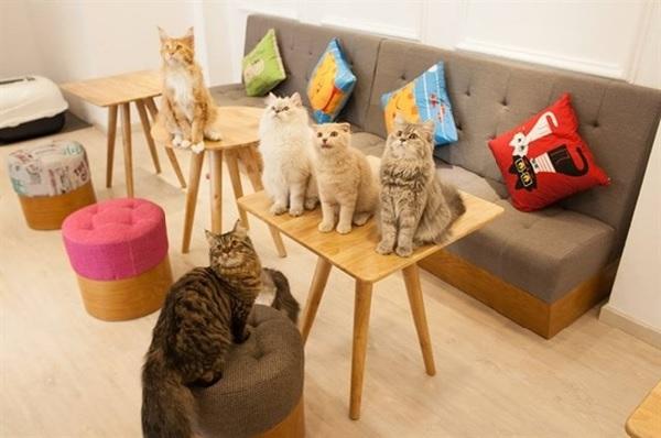 Mô hình kinh doanh cafe với các loài thú cưng khác nhau giúp bạn thu hút được nhiều đối tượng khách hàng hơn