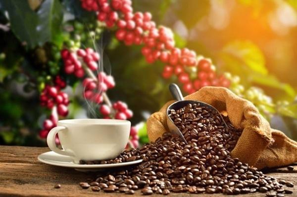 Tìm hiểu về cà phê: Cà phê được người Pháp đưa vào thị trường Việt Nam từ những năm 1875 và trồng thử nghiệm tại nhiều đồn điền trên khắp cả nước