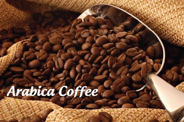Tuổi thọ của cây cà phê Arabica có thể lên đến 70 năm nhưng những cây 25 năm đã được coi là già và không thể tiếp tục thu hoạch nữa